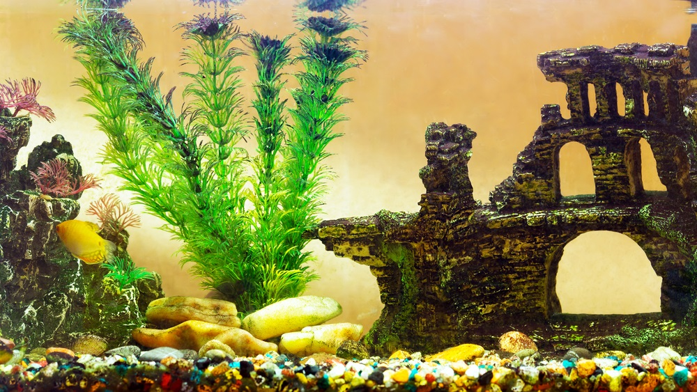 Mooiste aquarium decoratie