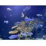 9. Terrarium of aquarium verlichting led