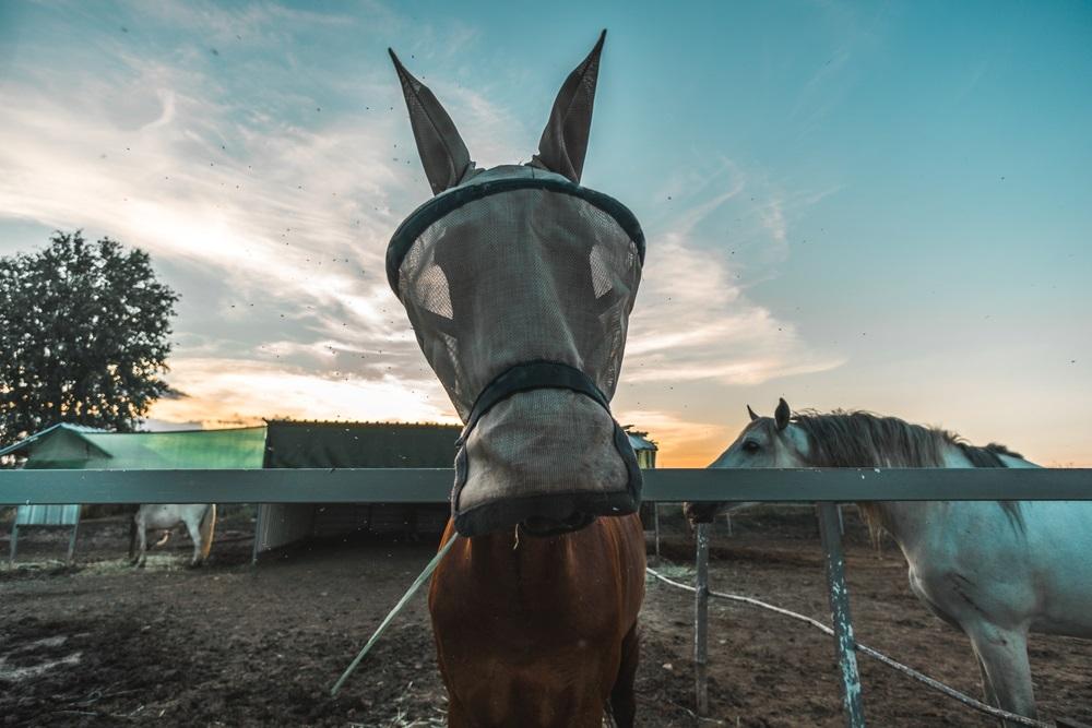 Vliegenmasker voor paarden