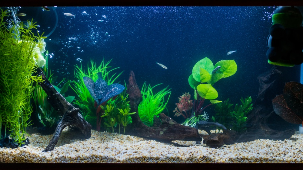 Binnenfilter aquarium