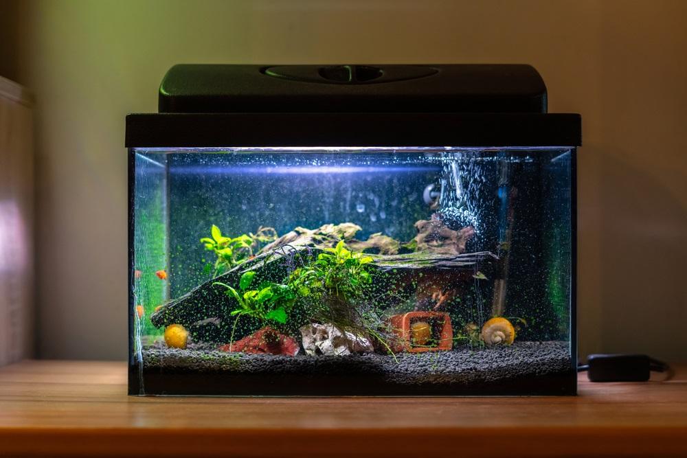 Kleine aquarium beste