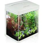 9. Nobleza aquarium