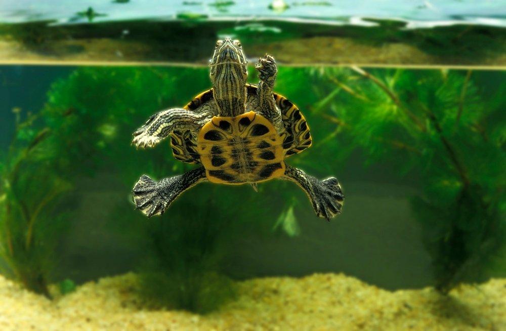 Schildpad aquarium beste
