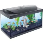 10. Starter Line aquarium zwart